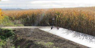 Hulajnoga na ścieżce rowerowej na tle pola kukurydzy