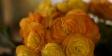 Dzień Matki, 26 maja 2021, róże